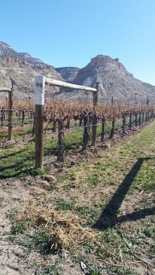 lovelivingincolorado Palisade wineries